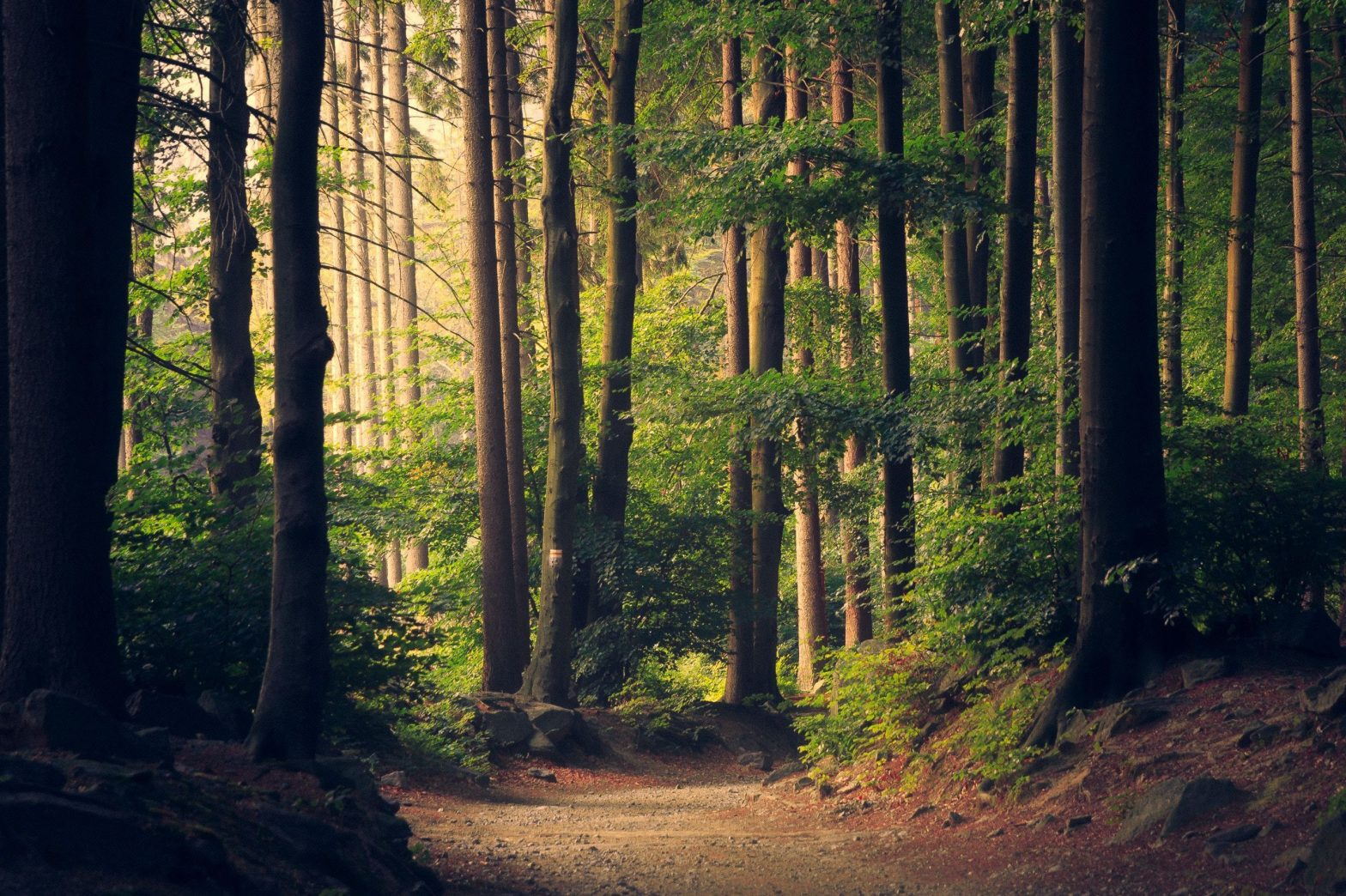 How to Get a Healthy Dose of Nature Wherever You Travel