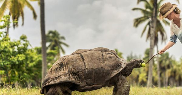 This Hotel Has Its Own Population Of Giant Tortoises
