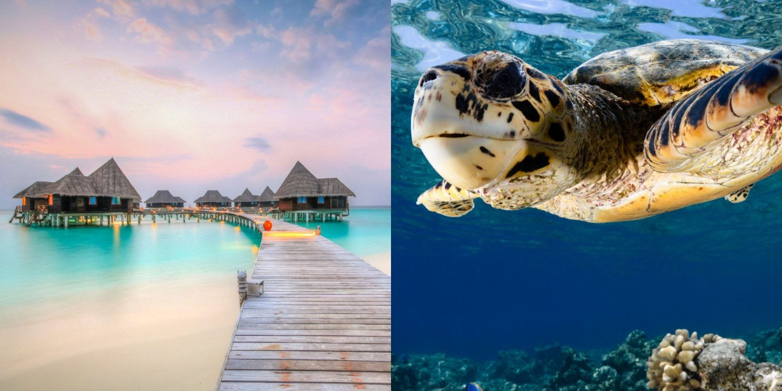 A luxury Maldives hotel is hiring an intern to look after turtles, with flights, overwater villa accommodation, and dolphin watching included